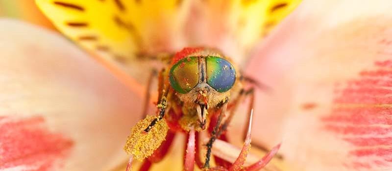 insecte Calès - foyer rural